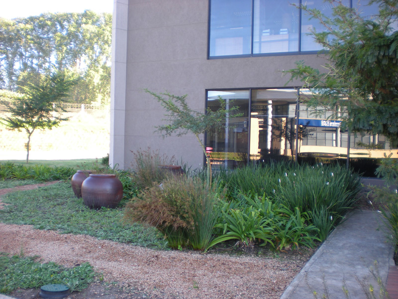 Indigenous gardens at ABSA Bank