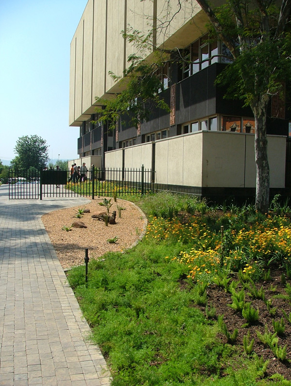 New indigenous planting at Msunduzi Library