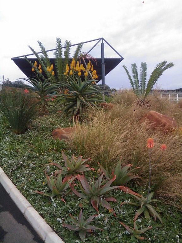 Low maintenance indigenous gardens for corporate offices in an eco estate