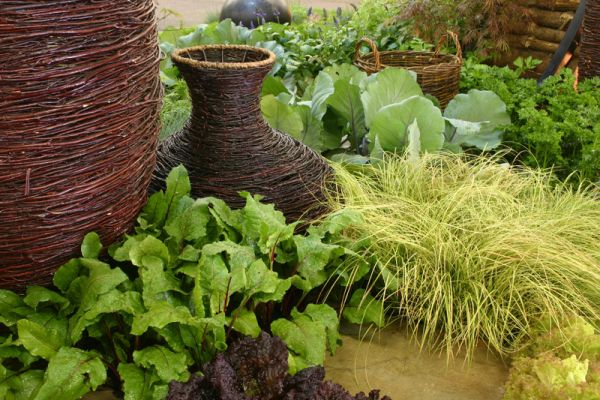2009 Garden & Leisure Show. The combination of the red lettuce and beetroot leaves were inspired to match the colours of the basketware.